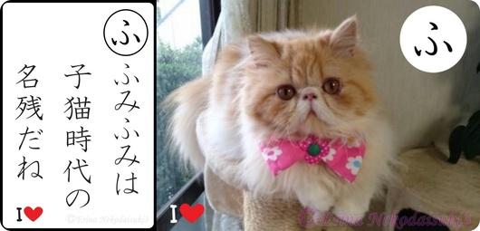 2連結Ⓒふみふみは子猫時代の名残だね&モコちゃん画像.jpg