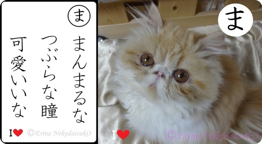 2連結Ⓒまんまるなつぶらな瞳可愛いな&モコ子猫時代.jpg