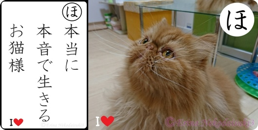 2連結Ⓒ大本当に本音で生きるお猫様&エポちゃん.jpg