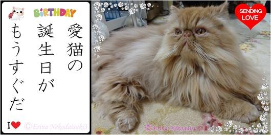 2連結Ⓒ愛猫の誕生日がもうすぐだ.jpg