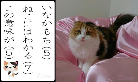 2連結ⒸErina猫川柳「いなかもちねこにはわかるこの意味が」&レナ.jpg