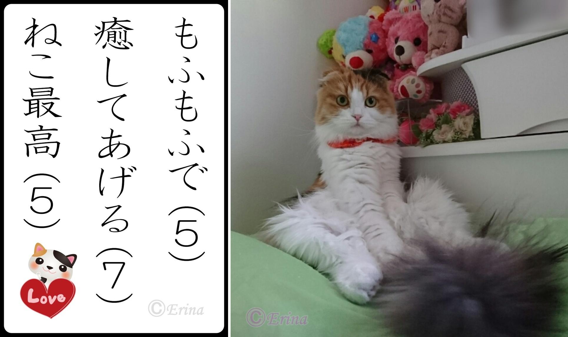 2連結レナとⒸ猫川柳猫loveもふもふで癒してあげるねこ最高-side.jpg