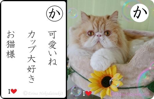 2連結可愛いねカップ大好きお猫様-&モコ.jpg