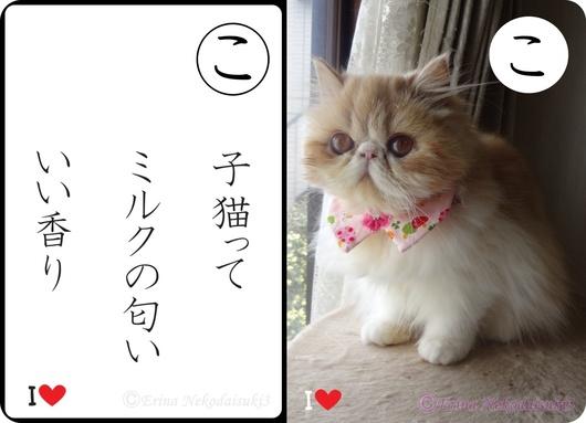 2連結子猫ってミルクの匂いいい香り&モコ.jpg