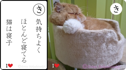 2連結気持ちよくほとんど寝てる猫は寝子&ルネ.jpg