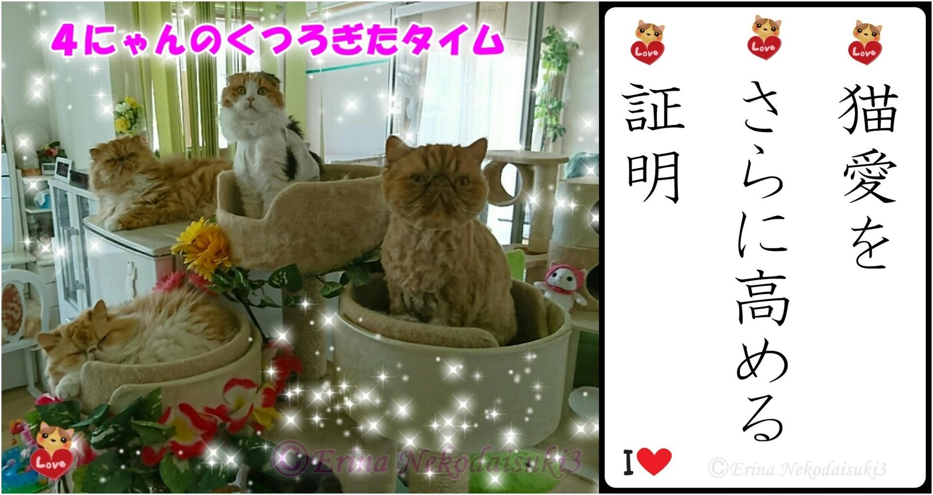 2連結猫川柳Ⓒ4にゃんのくつろぎタイム-side.jpg