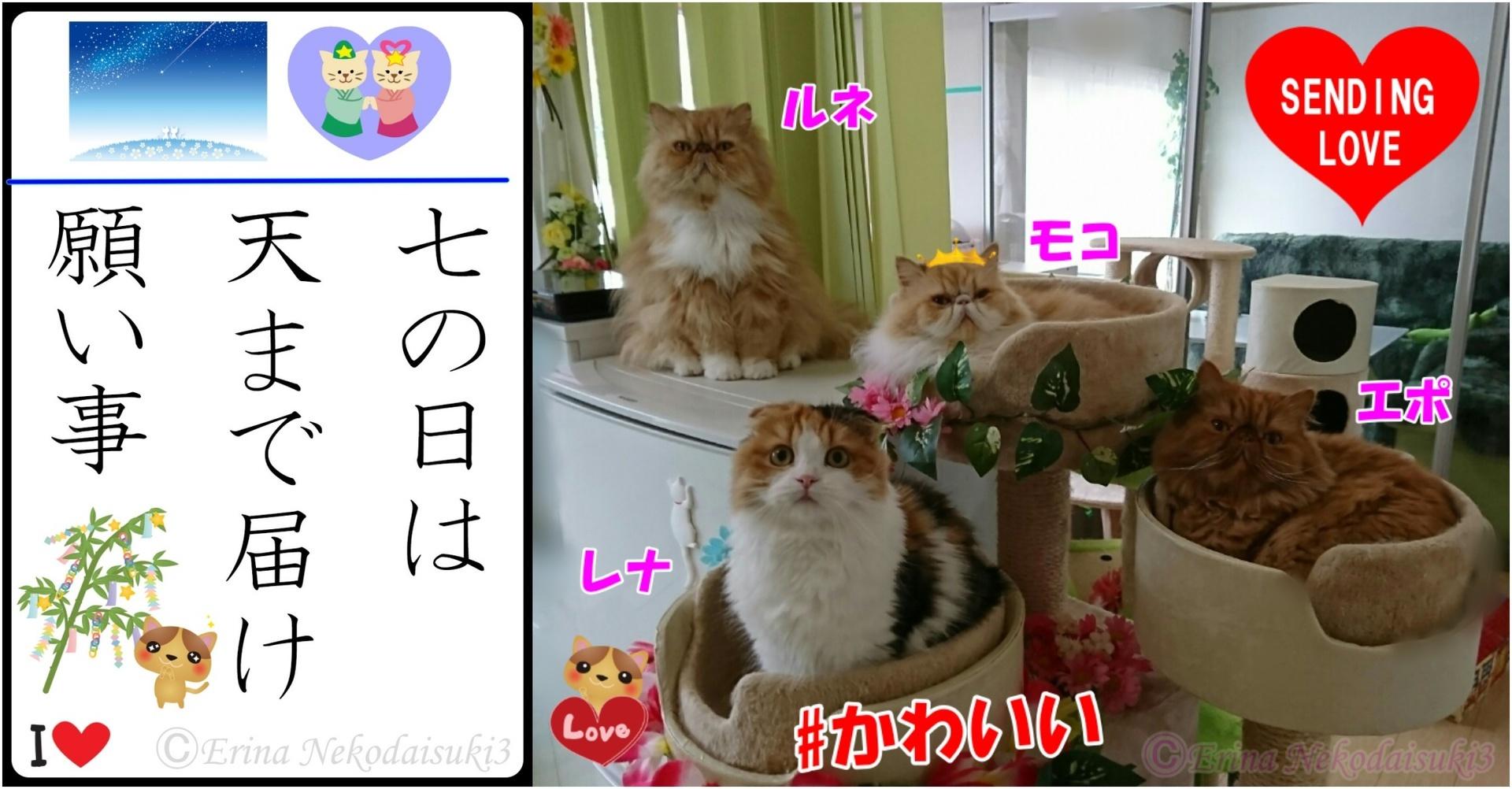 2連結猫川柳Ⓒ七の日は天まで届け願い事と4ニャンの写真.jpg