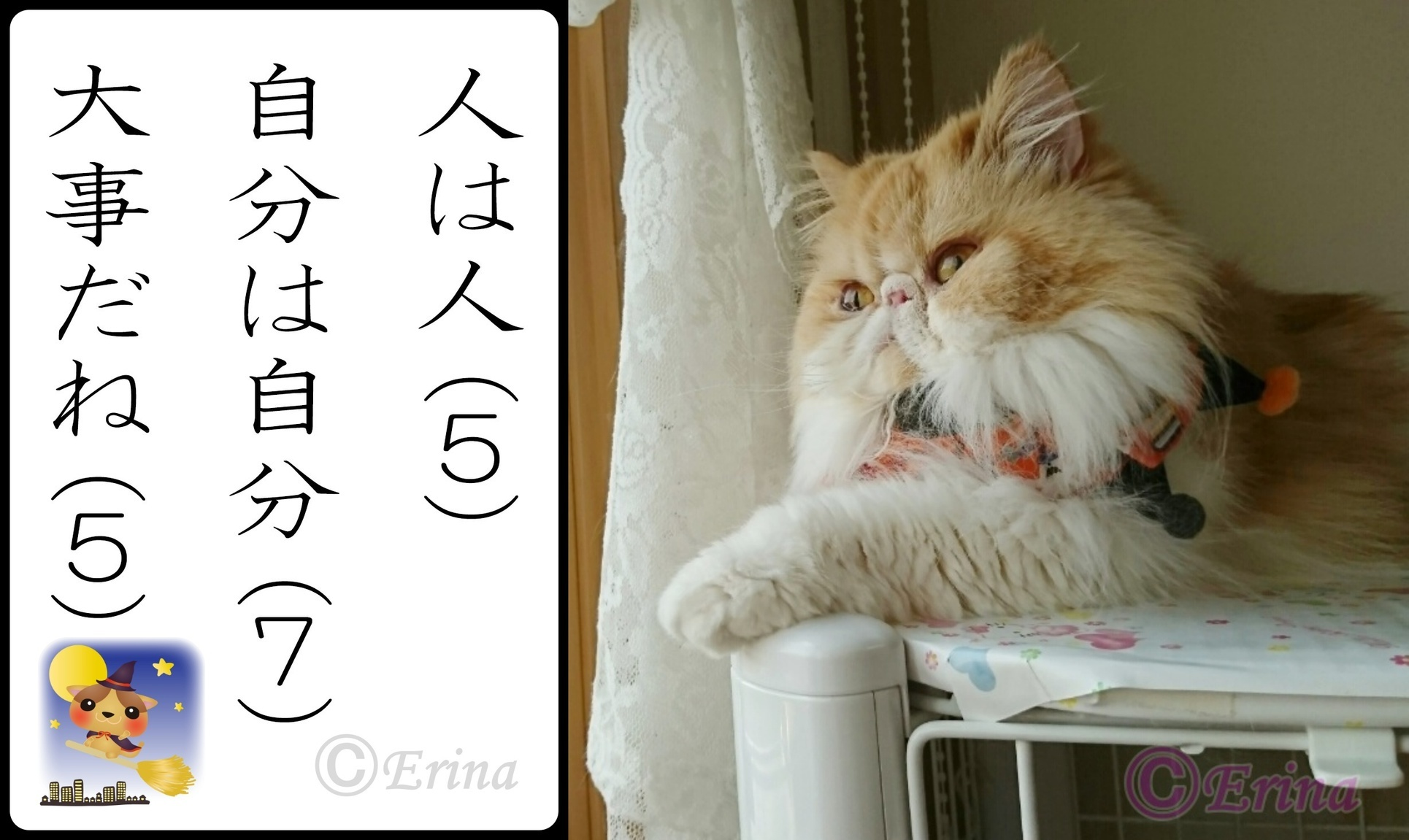 2連結猫川柳とモコⒸ人は人自分は自分大事だね-side.jpg