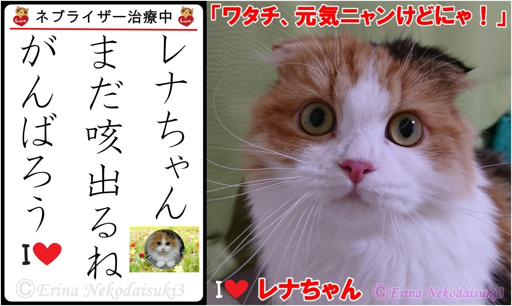 2連結猫川柳左側レナちゃん咳出ちゃうねがんばろう.jpg