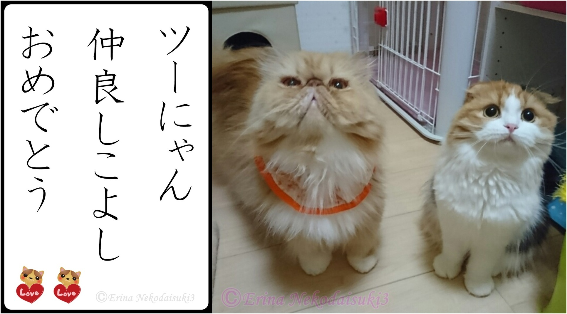 2連結猫川柳2にゃん仲良しこよしおめでとう-side.jpg