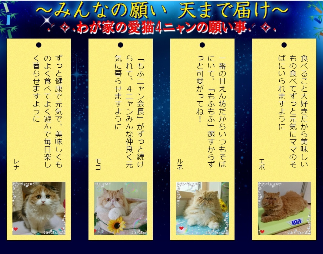 DP2018年PEPPY七夕投稿写真2018年七夕愛猫4にゃんの願い事.jpg