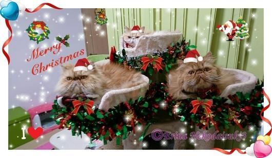 Ⓒ12月新3匹のカップメリークリスマスキラキラ.jpg