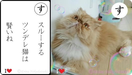 Ⓒ2連結スルーするツンデレ猫は賢いね-side.jpg