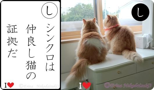 Ⓒシンクロは仲良し猫の証拠だ-side.jpg