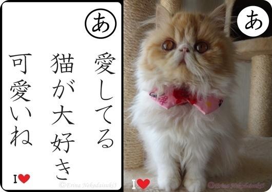 Ⓒモコ愛してる猫が大好き可愛いね.jpg