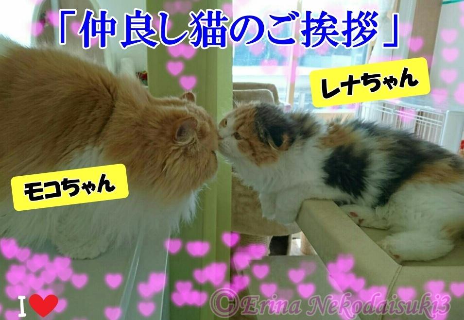 Ⓒモコ&レナ仲良し猫のご挨拶キラキラ_20180120.jpg