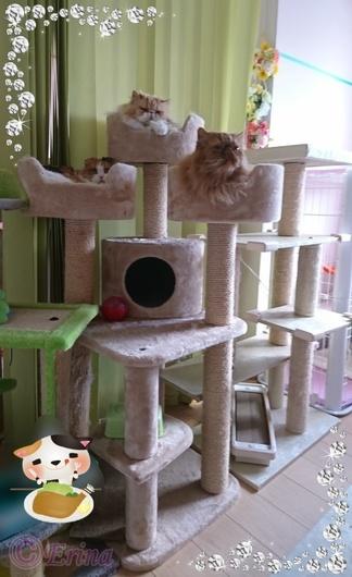 ⒸErinaPEPPYのキャットタワーと3猫のくつろぎ宝石枠Seesaaブログ用_jpg_large.jpg