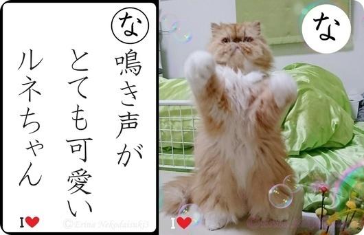 な行ルネ鳴き声がとても可愛いルネちゃん.jpg