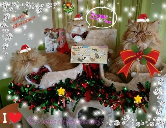 クリスマスコスプレ3匹カップでご挨拶2017-12-18.jpg