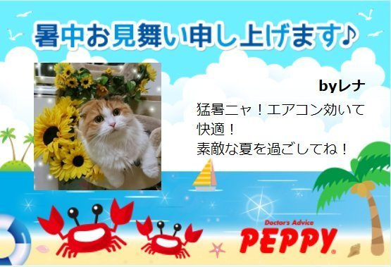 ブログ用PEPPYレナちゃんのサマーレター.jpg