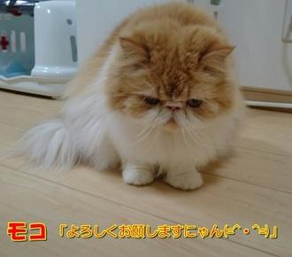 モコお辞儀17210.JPG