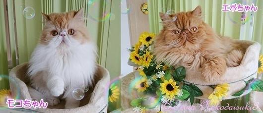 モコちゃんとエポちゃん2枚並びErina Nekodaisuki32017-8-16-horz.jpg
