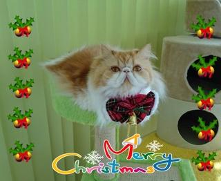 モコちゃんクリスマス.jpg
