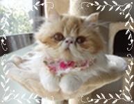 モコ子猫時代ハンモックフレーム付き幅193.JPG