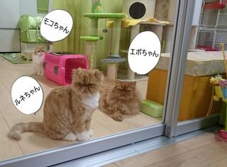 ルネとエポとモコ編集分.JPG