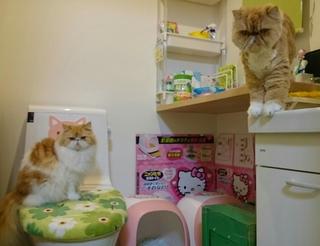 ルネとモコトイレ入る.JPG
