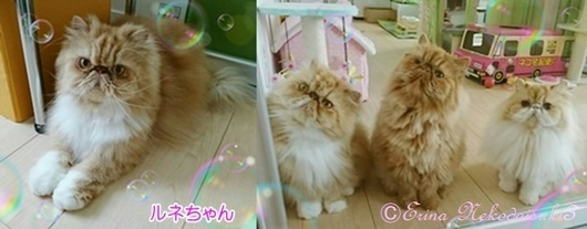ルネと3匹お帰りErina Nekodaisuki3-horz.jpg