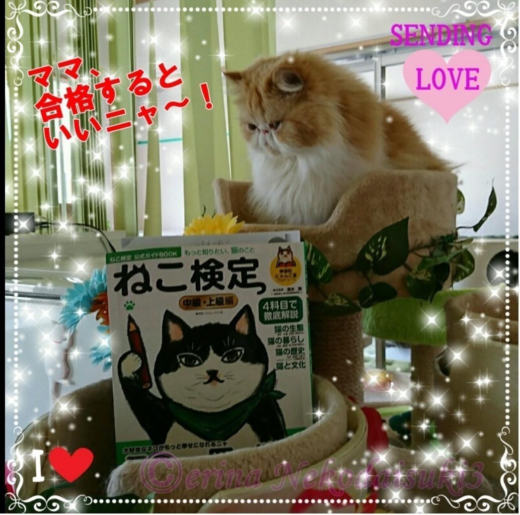 切り抜きモコとねこ検定緑テキスト.jpg