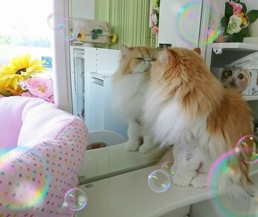 鏡気にするモコちゃん②.JPG