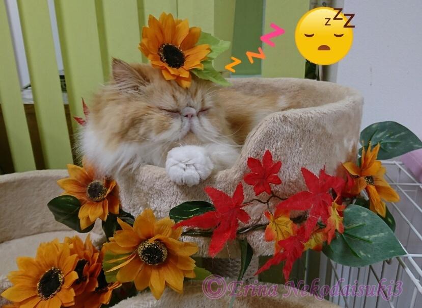 2Ⓒモコカップ寝オレンジ花のせ猫.JPG