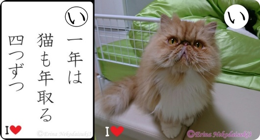 2Ⓒ一年は猫も年取る四つずつ&ルネ-side.jpg
