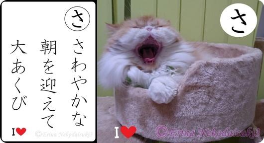 2連結Ⓒさわやかな朝を迎えて大あくびモコ-side.jpg