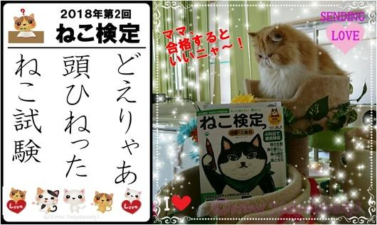 2連結Ⓒどえりゃあ頭ひねったねこ試験&モコちゃん.jpg