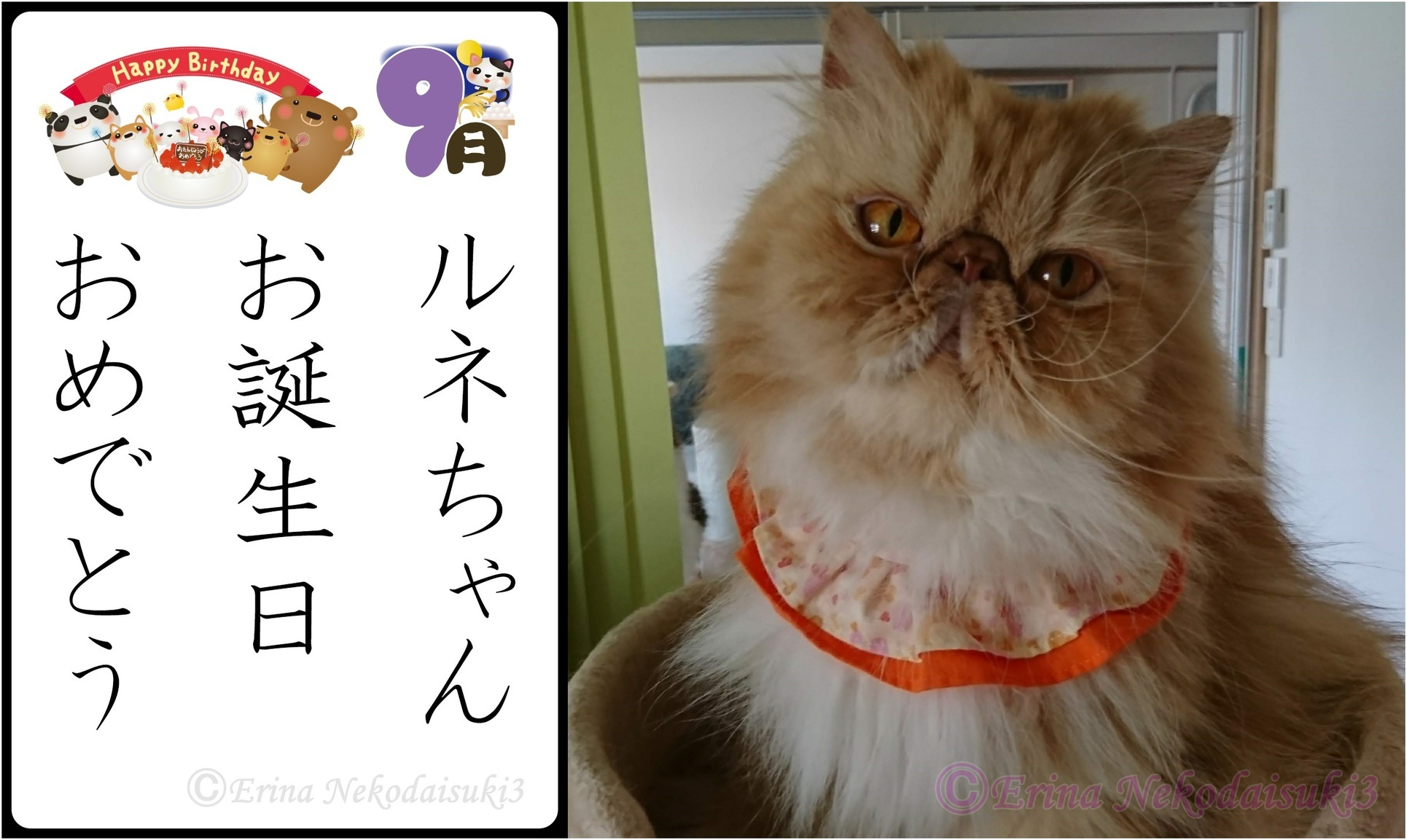 2連結Ⓒルネちゃんお誕生日おめでとう-side.jpg
