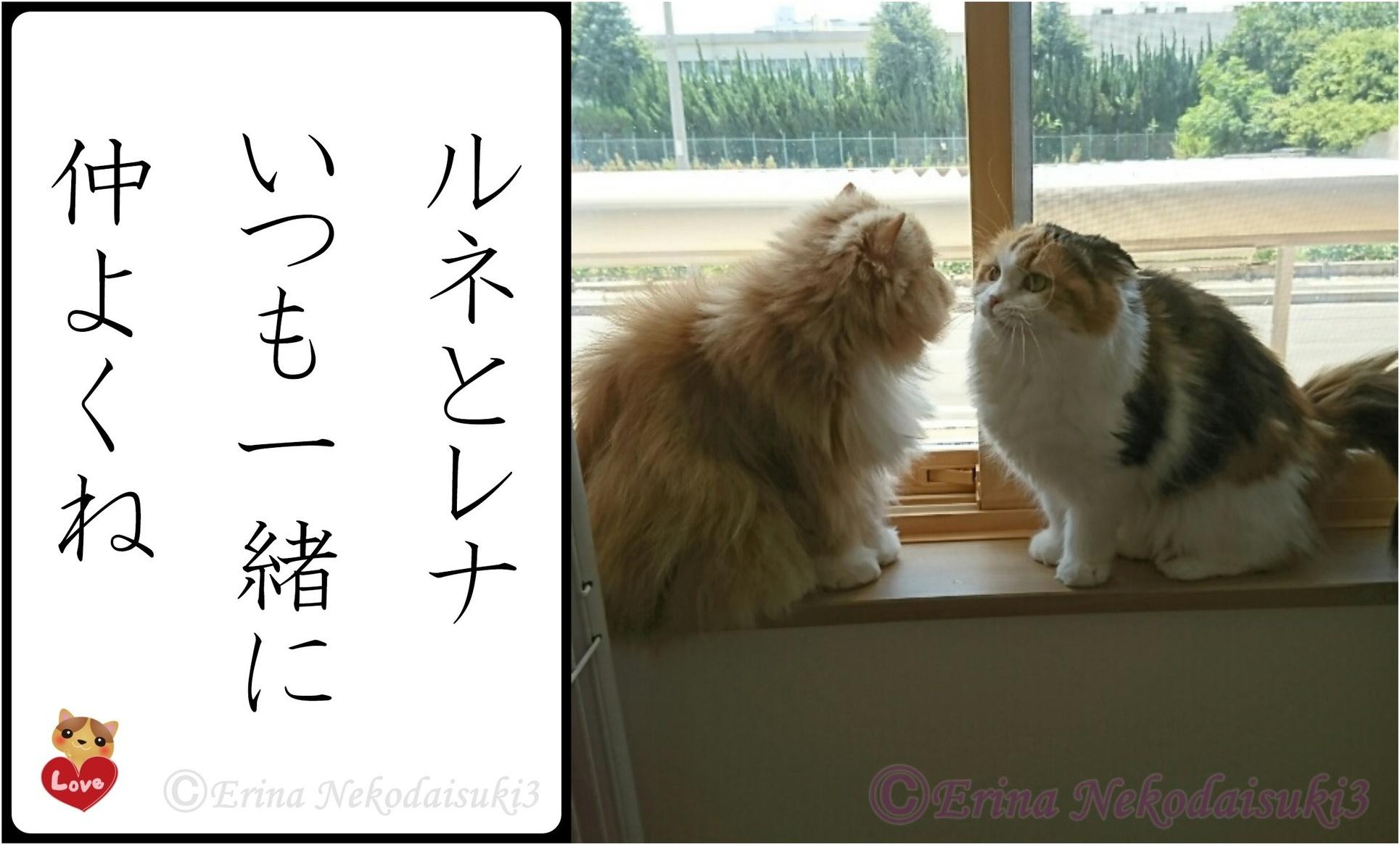 2連結Ⓒルネとレナいつも一緒に仲良くね-side.jpg