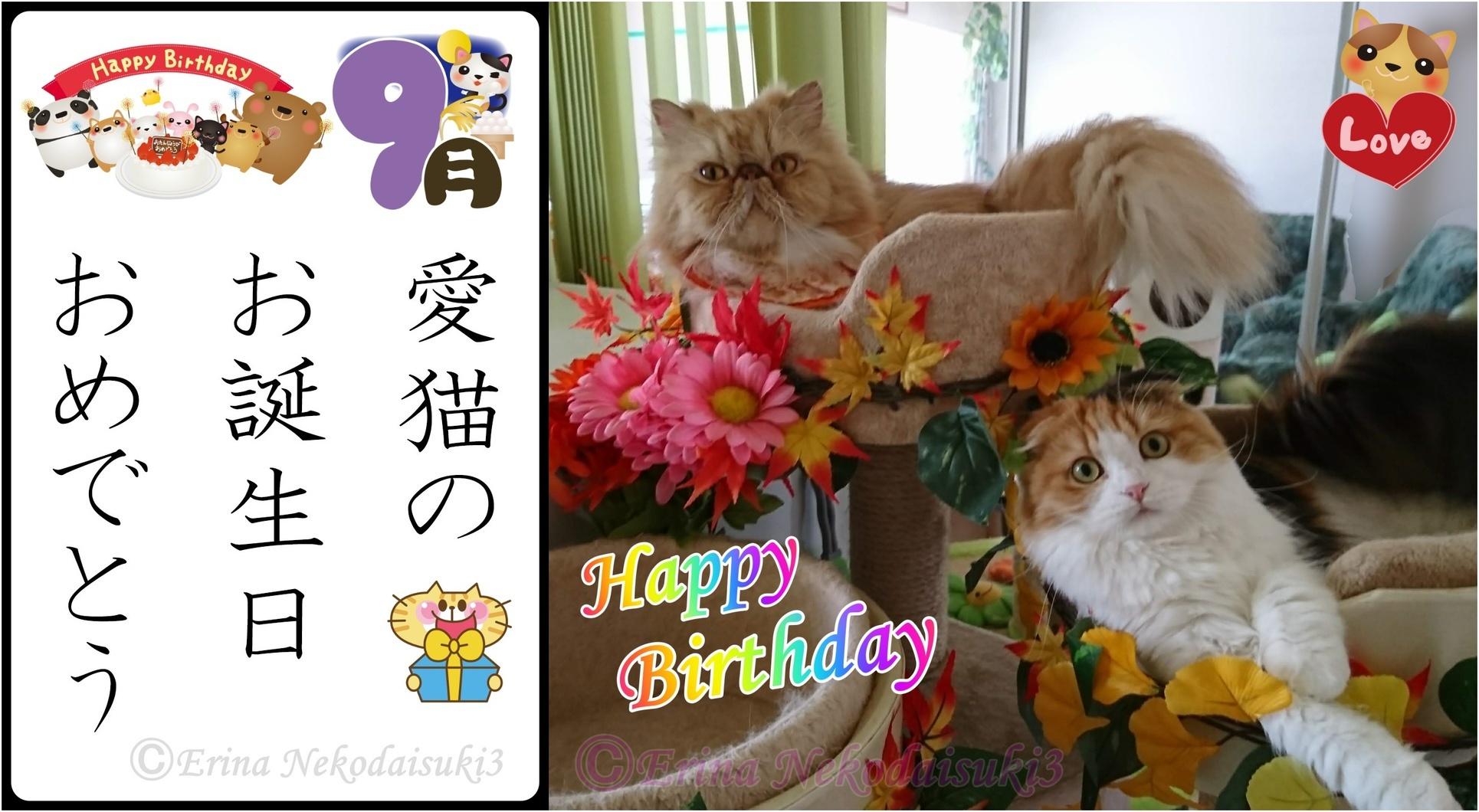 2連結Ⓒルネとレナ秋猫川柳愛猫のお誕生日おめでとう-side.jpg