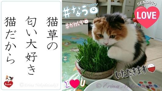 2連結Ⓒレナ猫草の匂い大好き猫だから-side.jpg