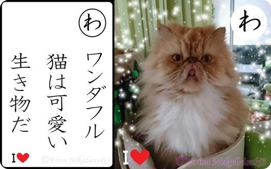 2連結Ⓒワンダフル猫は可愛い生き物だ&ルネ舌だし可愛い.jpg