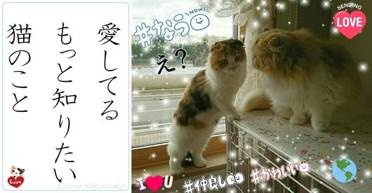 2連結Ⓒ愛してるもっと知りたい猫のこと-side.jpg