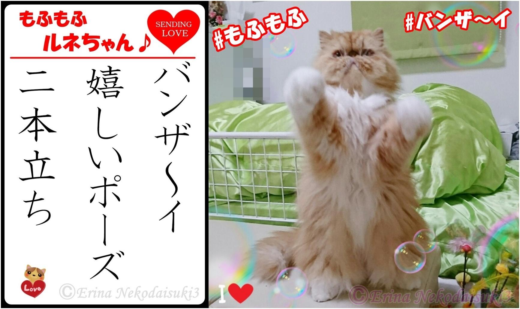 2連結Ⓒ猫川柳ルネバンザ~イ嬉しいポーズ二本立ち-side.jpg