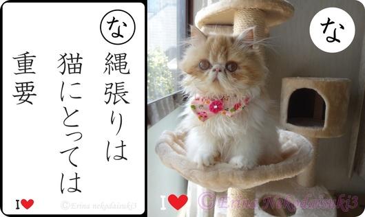 2連結Ⓒ縄張りは猫にとっては重要&モコ.jpg