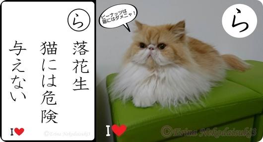 2連結Ⓒ落花生猫には危険与えない-side.jpg