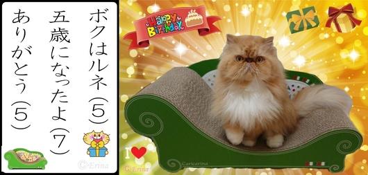 2連結ⒸErina猫川柳ボクはルネ五歳になったよありがとう-side.jpg