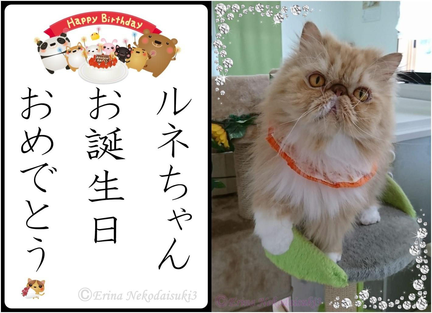 2連結ルネ写真有Ⓒイラスト付き猫川柳ルネちゃんお誕生日おめでとう-side.jpg