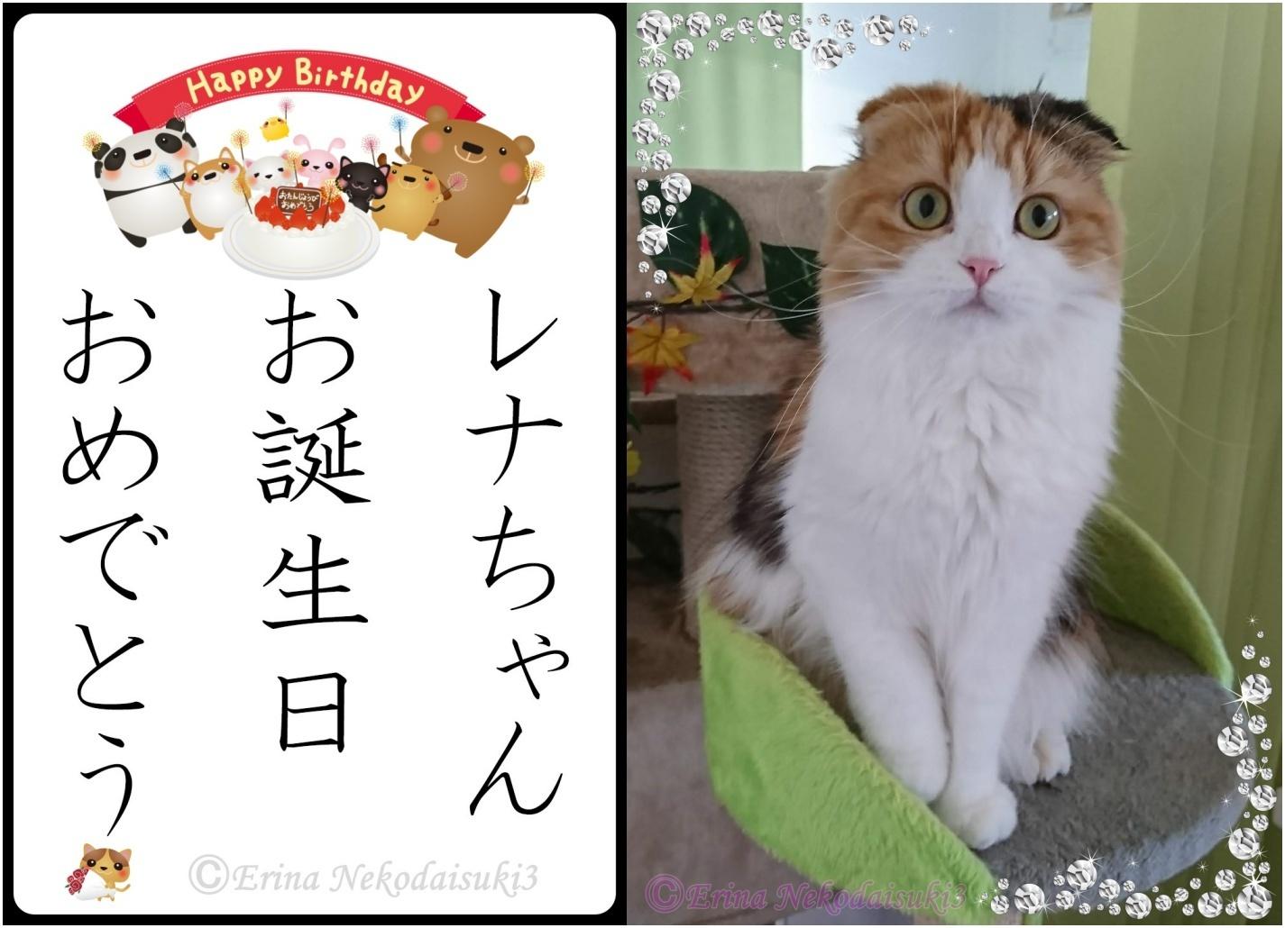 2連結レナ写真有Ⓒイラスト付き猫川柳レナちゃんお誕生日おめでとう-side.jpg