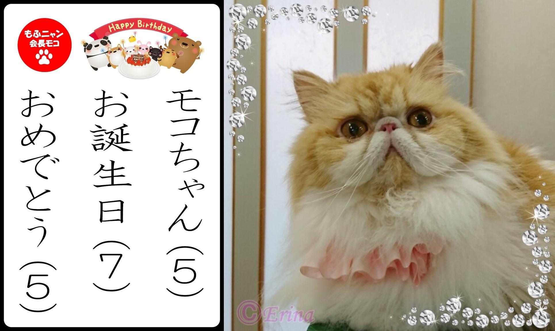 2連結猫川柳Ⓒもふニャン会長イラストモコちゃんお誕生日おめでとう-side.jpg
